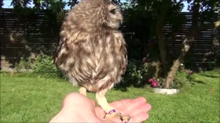 Little owl on my hand- so cute - Video