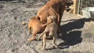 Playtime with Carmello - Video