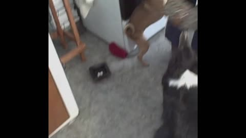 Dogs Desperately Beg Their Owner Not To Leave For Work