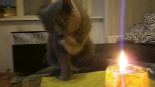 Curious kitten inspects candle flame