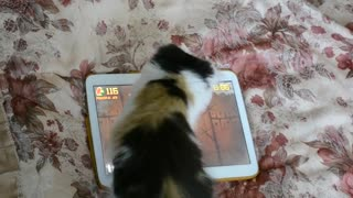 Kitten Plays Games On A Tablet - Video