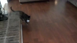 Cute cat playing fetch with a paper ball - Video