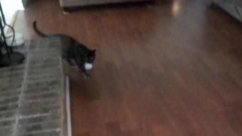 Cute cat playing fetch with a paper ball