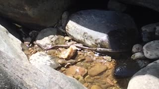 Two Snakes Fight Over A Fish - Video