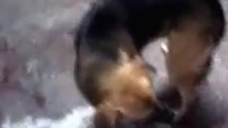 Ghosts cats attacks a dog - Video