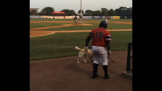 """Dog acts as """"bat boy"""" for pro baseball team"""
