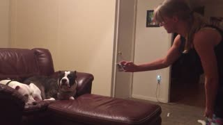 Dog refuses to have his photo taken - Video