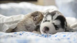 Cats and dogs as best friends: Cute and adorable video compilation
