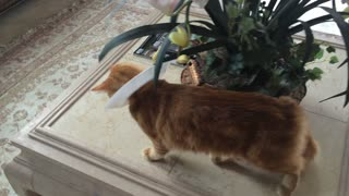 Jack the Cat demos Paper Plate E-Collar part 2