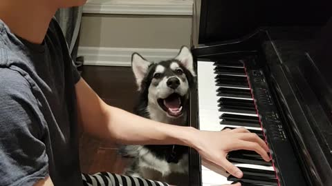 Husky sings along to owner's piano solo