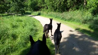 Foals coming back from their first trail ride