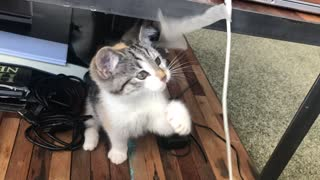 A cat playing funny