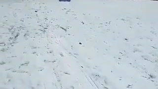 Dog using a sled to slide on snow