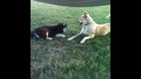 Dog Shows Puppy That Is Not How You Talk To Your Elders
