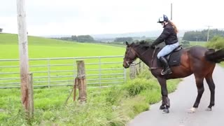 The Thoroughbred Is A Horse Breed Best Known As A Race Horse - Video