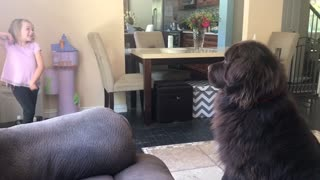 Dog tries to figure out little girl's crazy signals - Video