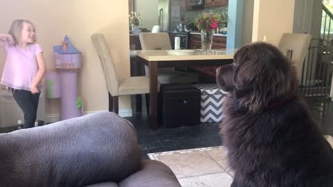 Dog tries to figure out little girl's crazy signals
