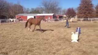 Horses (VIDEO) Cute and Funny – Horse's First Reaction to Jump! - Video