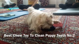 Cheap Chew Toy To Clean Teeth - my dog loves this No.2  - Video