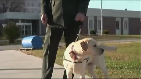 Soldier Walks Into A Prison With A Dog. Now Watch The Pup's Reaction When He Sees THIS Inmate…