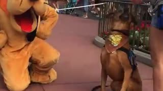 Service Dog Cannot Contain Excitement Upon Meeting Pluto At Disneyland