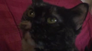 Owner pulls back black cats ears to make funny faces - Video