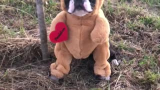 Adorable Pup Dressed Up