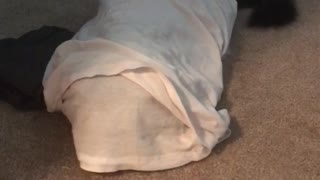 Dog hiding under blanket