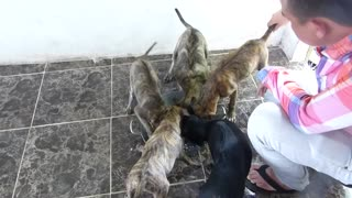 4 dogs have the most bizarre fur in the world  - Video