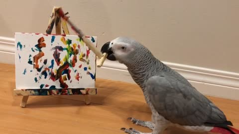 Genius parrot displays vast array of tricks