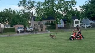 Dog running after my bike