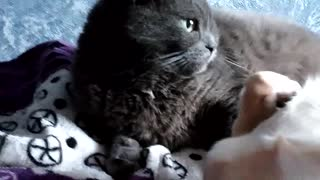 The cat has accepted and to be licked a dog  - Video