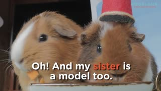Fuzzberta the model Guinea Pig - Video