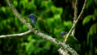 Nature Ave Fauna Green couple on tree