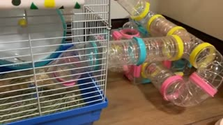 This pampered hamster has one impressive home!