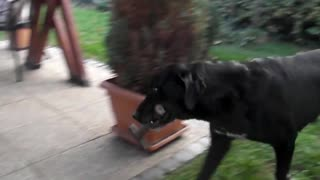 Helpful dog fetches tool for his owner