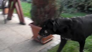 Helpful dog fetches tool for his owner - Video