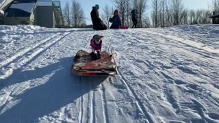 Chihuahua Surfs Through the Snow on Boogie Board