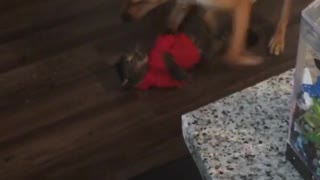 Cat fights with dog  - Video
