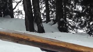 Wooden log rail slide fail