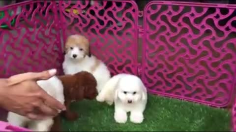 Four puppies are having fun - they are mischievous
