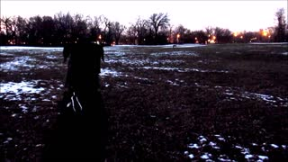 Coyote Howling in Chicago - Video