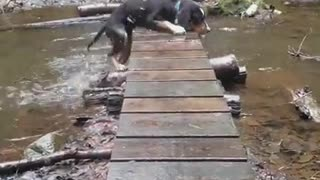 Black puppy falls off bridge and into water