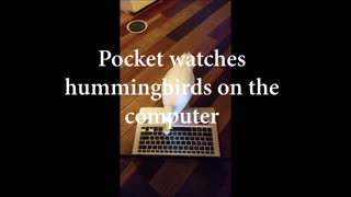 Pocket Duck and the laptop - Video