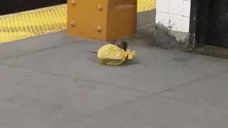 Subway Rat Drags Away Takeout Food