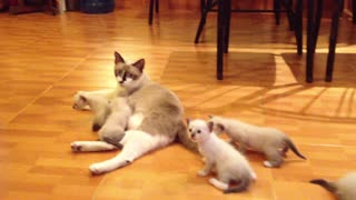 Cats and their mother