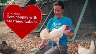Watch this chicken do card tricks! - Video