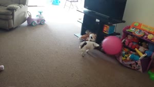 Dog attacks ball - Video