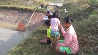 Catching big Snakehead fish in mud