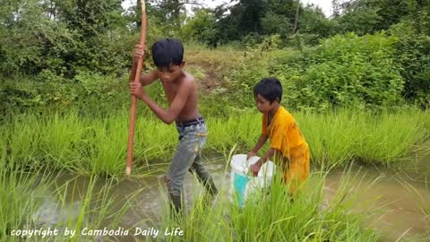 Amazing Farm Kids Catch Fish After Heavy Rain in The Rice Field